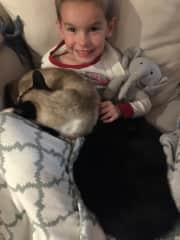 Aiden and his favorite pets at our last house sit. We don't have cats at home. He loves cats and they seem to love him, too!