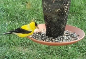 We enjoy feeding and watching the birds