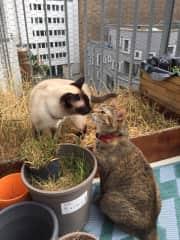 Basilia and Keiko