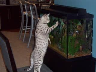 The Late Simba & Fishies