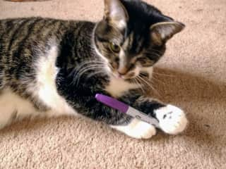 Kitty Wap