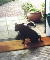 Our dogs,Tini & Tessie