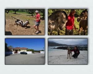 Estate and horse care in Sao Teotonio (Portugal) and house and pet sitters in Alhaurin el Grande (Spain)