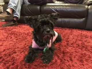 Birkenhead NZ 2016-2018: 1 dog
