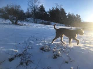 Walton in the snow