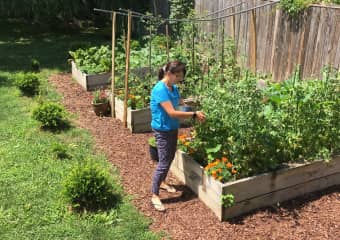 Love Horticulture & gardening. Location, a great sitting in Takoma, Washington DC