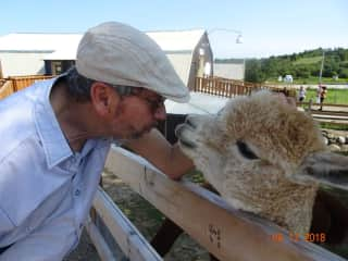 Ron communicating with his Alpaca friend