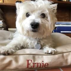 Ernie Cutest Dog Ever