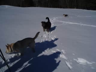 Scraps and Friends - Dakota and Maddie in the Snow in Maine