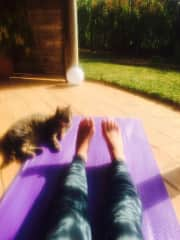 Tiger our retreat cat who loved to join my classes everyday :)