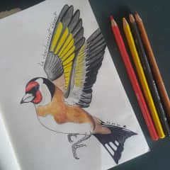 And I love drawing!