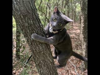 Nature reserve *cat walks optional
