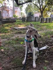 Solea at the nearby historic Woodlands Cemetary