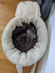 Curled up in her mouse bed