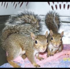 Our sweet squirrel babies as they grew ❤️
