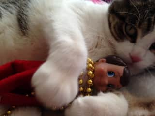 Gato, our cat, with Chippey the Elf.