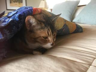 patches sleeping in our bed...she prefers laps with a blanket