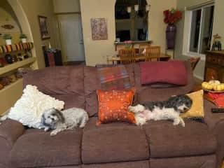 Tuzi on left; Charlie on right.