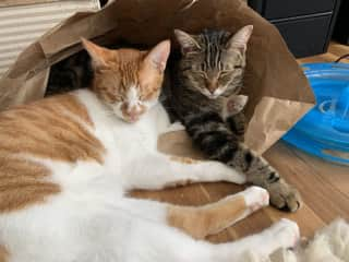 Arlo and Delilah and the paper bag bunker