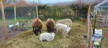 Jimmy, Sprinkles, Toby, Teddy and William! The lawnmowers and hedge trimmers! They wear cow bells..sounds of the Alps!