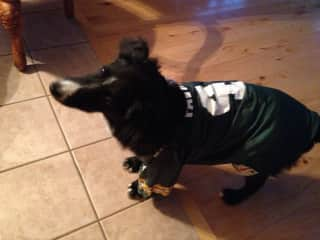 The Grandog - Cheering on the Green Bay Packers.