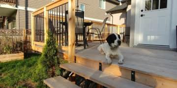 Jasper snoozing on the deck