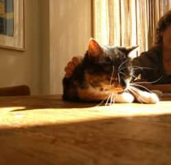 Lazy, Sunny, Sunday.