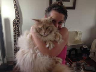 Rose with Rafael (a huge Maine Coon)