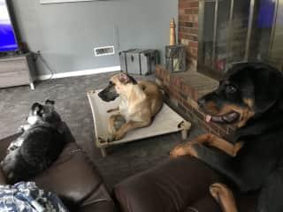 Bonnie, Boris and Poochie