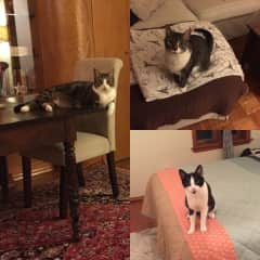 I'm not in these pictures, but these are three pets that I have taken care of in previous years on a fairly regular basis.