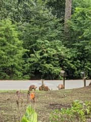 We are located close to Battle Creek Trail and the UNC-Chapel Hill Campus. We often get deer, owl, and bunny visitors!