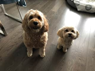 Molly and Jackson, Collingwood, Canada