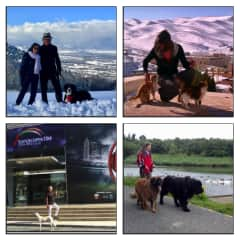 House and pet sitters in: Geneva (Switzerland), Faraya Mzaar (Libanon), Doha (Qatar) and Felbridge (England).