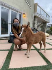 Got to help care for a miniature horse named Sweety!!