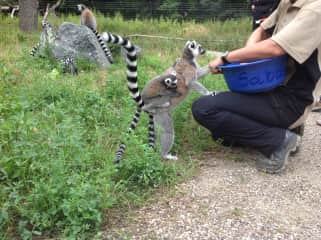 Feeding meerkats