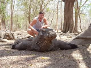Komodo dragon - it's not mine....