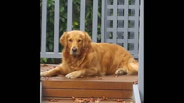 Ziggy relaxing on the rear deck