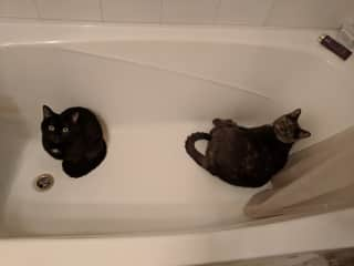 two cats in tub. Not typical.