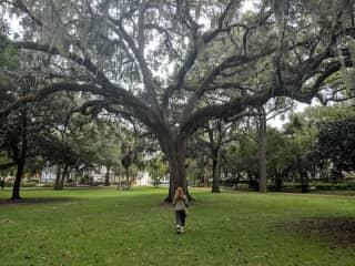 Strolling through Savannah!