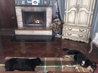 Pulga and Emma at home