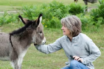 Baby donkey in the New Forest