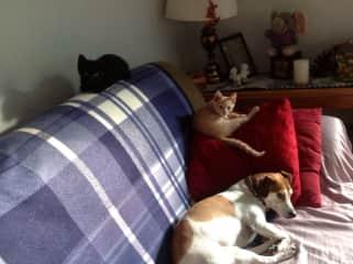 Hercules, Cleo, Ari resting