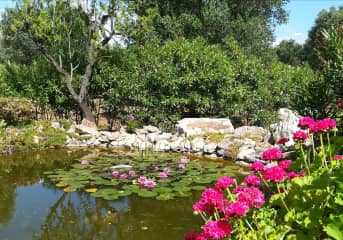 Lilly & fish pond