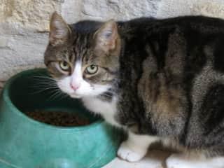 Cat Grisette