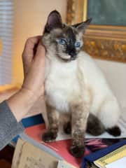 """Rescue Blue """"Belle"""" getting scratches"""