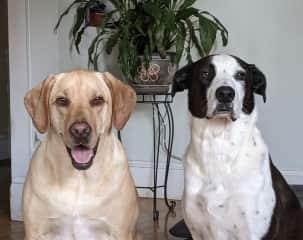 Nala and Rickon!