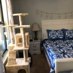 Master bedroom with cat tree, of course