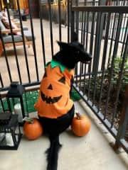 Loki's Halloween Outfit
