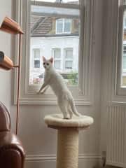 Ziggy loves a bit of neighbourhood watch - keeping an eye on what's going on outside the front window!
