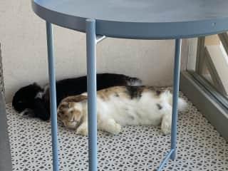 my bunnies Bouka and Bizo napping on the balcony